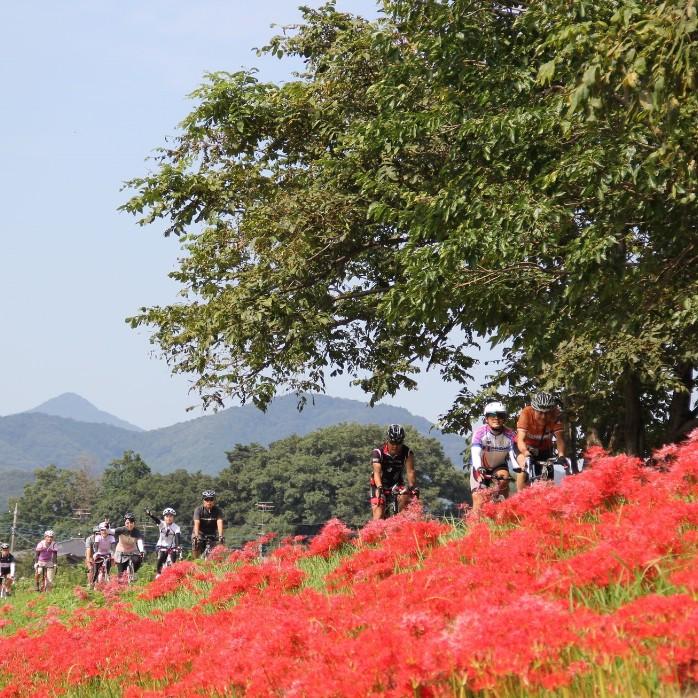 景色もグルメも大満足!レンタルOK・初心者も安心の自転車ツアー