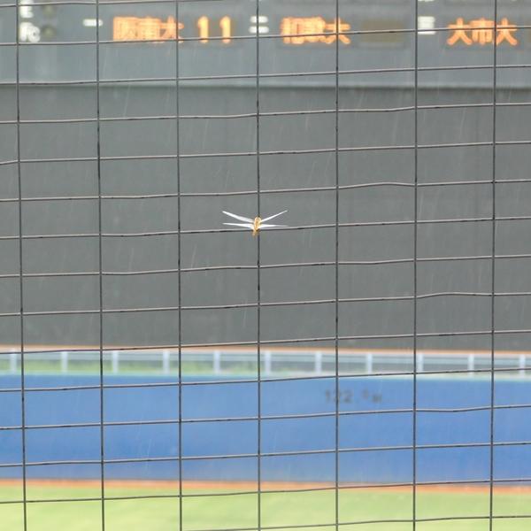 関西地区大学野球秋季リーグ 展望と開幕情報